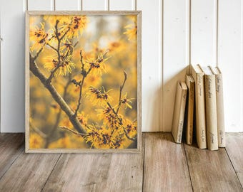 Yellow Flower Photography - Nature Photograph - Yellow Floral Print - Dreamy Photography - Spring Decor - Native Plant - Branches - Twigs