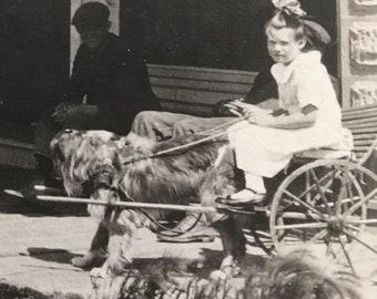 Little Girl in Dog Cart Vintage Photo