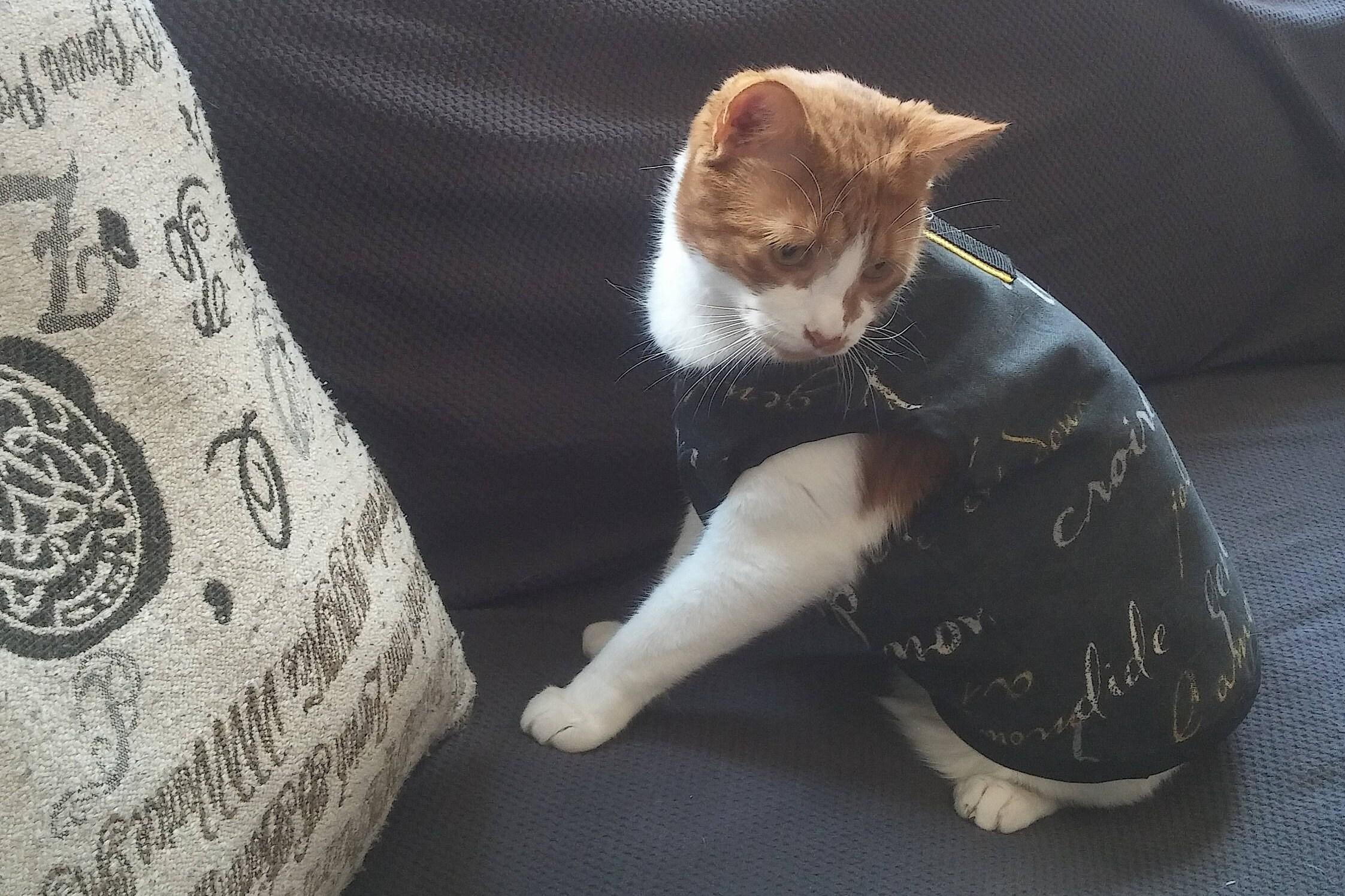 Katze Geschirr Haustier Kleidung Haustier Weste Hund Weste