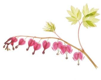 Bleeding Heart Print,  Bleeding Heart Botanical Print, Pink Floral Decor, Nursery Decor, Bedroom Decor