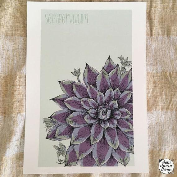 Sempervivum art print for the Flower Power Fund