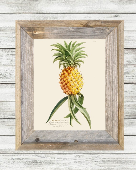 Vintage Botanical Pineapple Printable