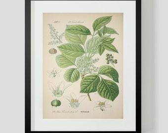 Botanical Print Plate 324