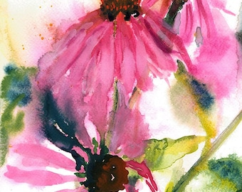 Echinacea/Purple Cone Flower/Watercolour Coneflower