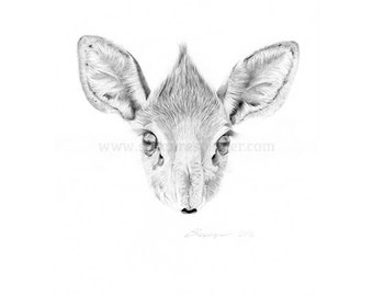 Dik Dik Head Limited Edition Print