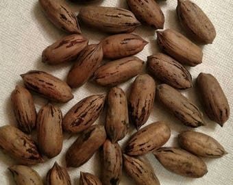 Best price~  2017 Fresh pecans~ large papershell pecans from Texas