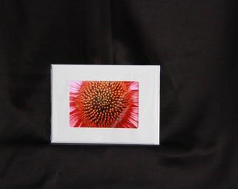 Flower notecard photograph