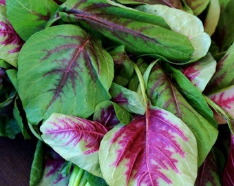 Organic Heirloom 3600 Seeds Amaranth Chinese Spinach Red Edible Vegetable Garden Seeds F33