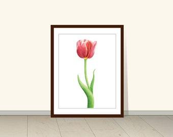 Tulip Print, Red Tulip, Flower Print, Tulip Watercolor, Tulip Flower Print, Florals, Watercolor Tulips Print, Art Wall Decor