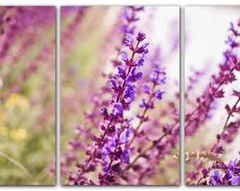 Photo on triptych canvas, ready to hang canvas, Nature Photography, wall art. Delicate purple flowers blooming in the meadow.