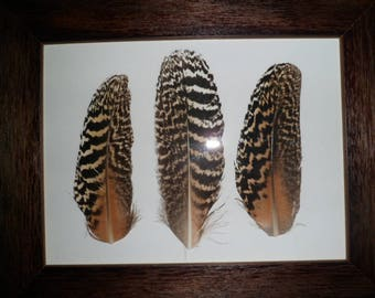 Wooden frame and real peacock feathers
