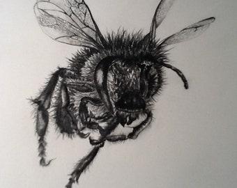 Bee - Black & White