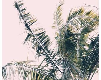 Nature Photograph- Palm Tree Print - Tropical Art - Palm Art - Winds of Change #1 - Fine Art Print- California Print - Florida Art Print