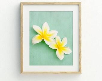 Plumeria art, plumeria prints, Hawaiian decor, Hawaii art, printable photography, DIY tropical flower print, tropical flower art printable.