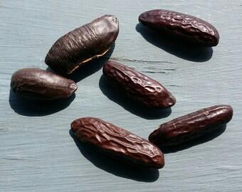 3 Lucky Tonka Beans