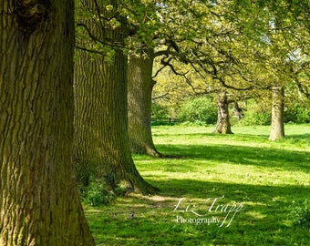 Row of oak trees in spring. Instant download