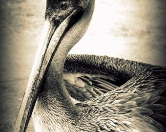 Pelican- Fine Art Photopgraphy print 5x7 by Alana Gillett- Bird Ocean Sea Black White Beach Decor Wall Art Home Decor