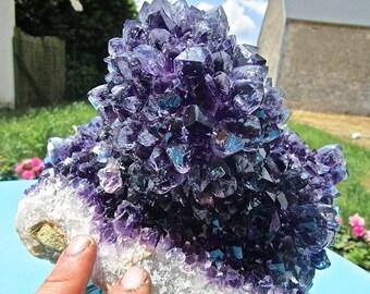 exceptional Amethyst cactus, Uruguay, deep purple +++