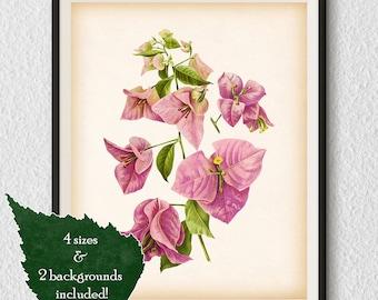 Home print, Bougainvillea, Printable wall art, Wall print, Antique botanical print, Vintage flower print, Instant download printable art #44