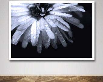 Photograph - Raindrop Rain Drop Daisy in Black and White in Macro Fine Art Photography Print Wall Art Home Decor