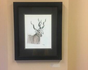Greater Northern Kudu
