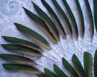Nice Lot of 35 Dark Forest Green Hahns Miniature Macaw Feathers, Flight Feathers, Crafting Feathers, Jewelry Feathers, Parrot Feathers