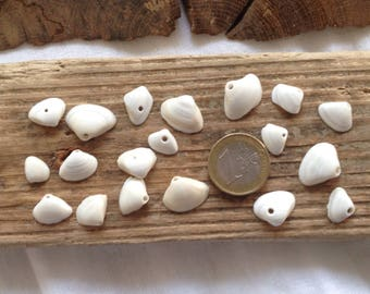 20 small shells naturally drilled in the South of the France