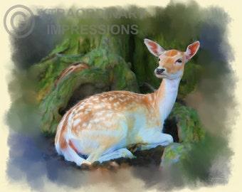 Original Art, ACEO, Deer, Protected