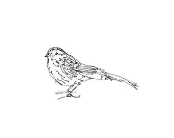 Sparrow Bird Art - Giclee Print 8X10 - songbird, line drawing, pen ink