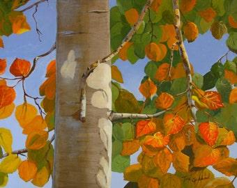 Autumn Aspen - Prints