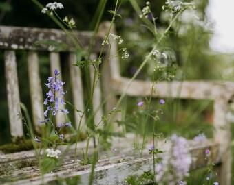 The old garden bench - Fine Art Print, Garden Photography, Garden Print, English Garden Photography, Wall Art, Gifts for Gardeners