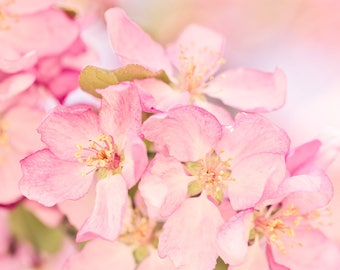 Pink Flower Photo, Bedroom Wall Art, Cottage Chic, Spring Floral Print, Bathroom Wall Decor, Pink Wall Art, Crabapple Blossom Photo