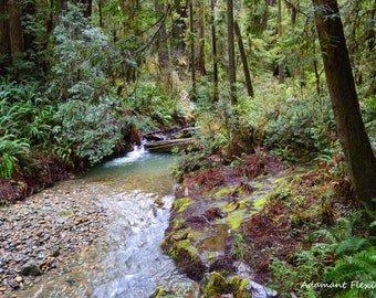 Redwood Stream, Jedediah Smith State Park, Landscape Photography, Northern California