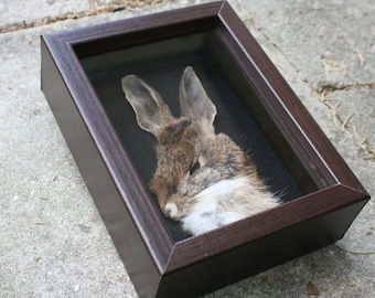 Rabbit Shadowbox 001