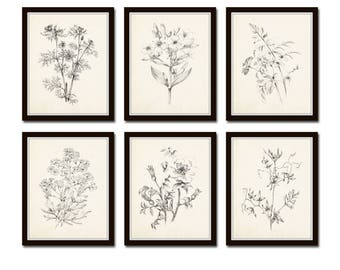 Vintage Botanical Sketch Prints Set No. 1, Botanical Prints, Giclee, Art Print, Vintage  Botanicals, Illustration, Flower Prints, Flower Art
