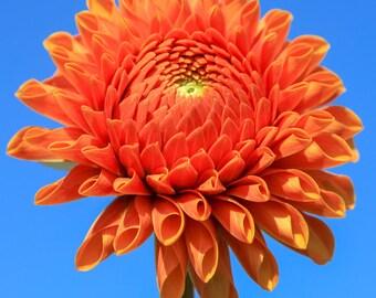 Floral Greeting Card - A 'Ruth Ann' dahlia (Eager)