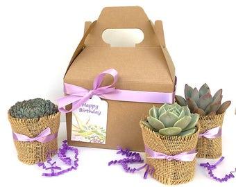 Purple Succulent Gift Box-Gardener gift-Plant in a box-Succulent Gift Box-Thank You Gift-Plant Gift Box-Birthday Gift-Mother's Day-Plant Mom