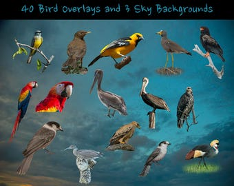 40 Bird Overlays