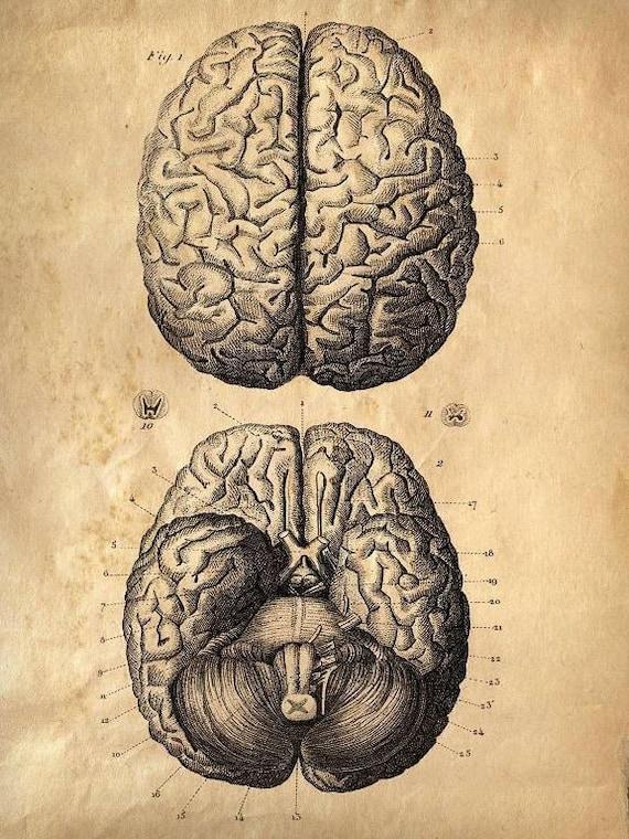Descargar juegos del cerebro cerebro anatomía Sepia imprimir