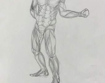 Muscle Study