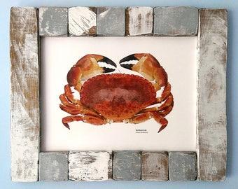 Digital Red Rock Crab print, Crab illustration, Coastal print, Various sizes
