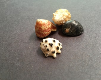 Hawaii mixed sea shell set of 4