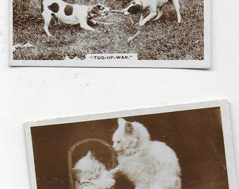Authentic De Reszke Cigarette Cards Real Photographs Animals Circa 1930's FULL SET of 27 Cards !!! Very Cute collection MINT Condition