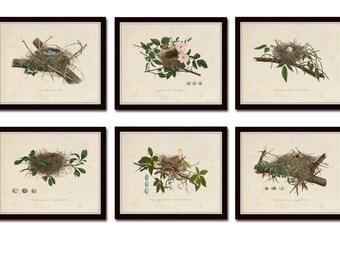 Vintage Bird Nests Print Set No. 1, Art Prints, Vintage Birds, Wall Art,Bird Nest, Bird Eggs, Natural History Art, Scientific Illustration