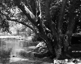 black and white river and tree nature scenery photography print