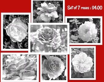 Set # 2 - 7 Roses