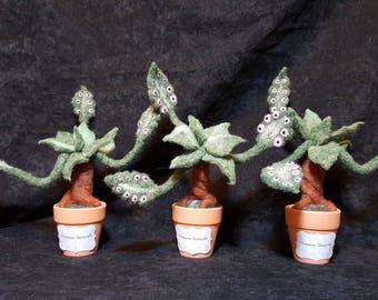 Needle Felted Venemous Tentacula Plant