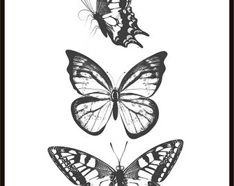 Butterflies Print Black White Print Butterfly Poster Wall Art Print Insects Poster