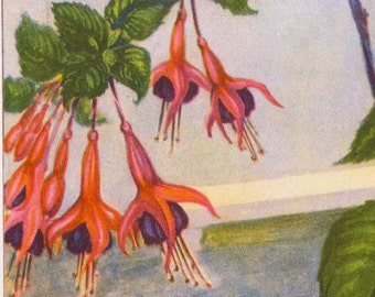 Fuchsia Flowers 1920s Old Fashioned Vintage Country Cottage Garden Botanical Lithograph Print To Frame