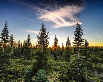 Coniferous Sunset, Plumas National Forest, California